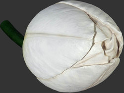 Tulip Sculpture - White