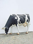 COW HEAD DOWN - LIFE SIZE COW STATUE