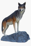 Wolf on Rock